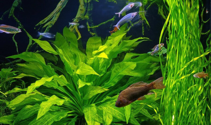 Growing healthy aquarium plants