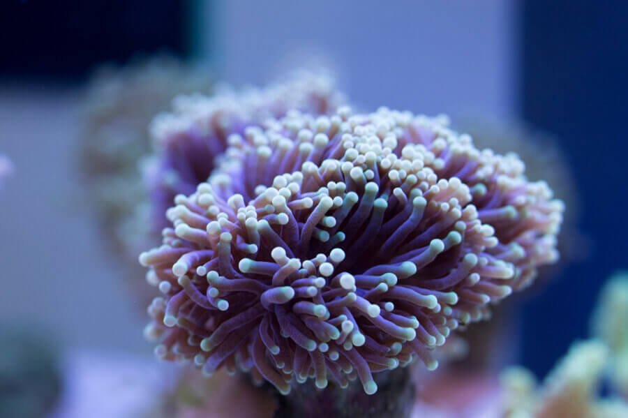 Soft corals are a comm...