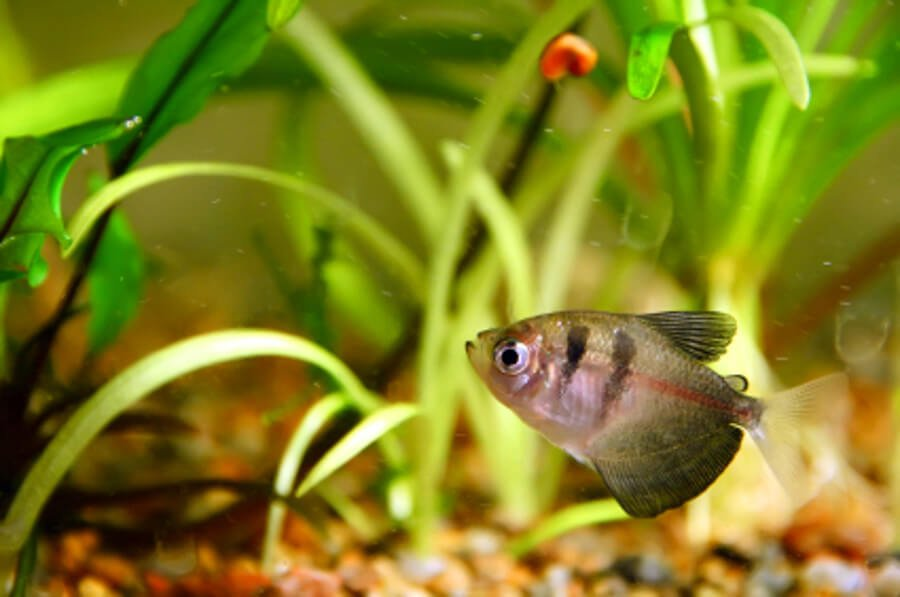 Treating sick aquarium fish with dips and baths for Salt bath for fish