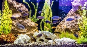 Tropical freshwater aquarium with fish