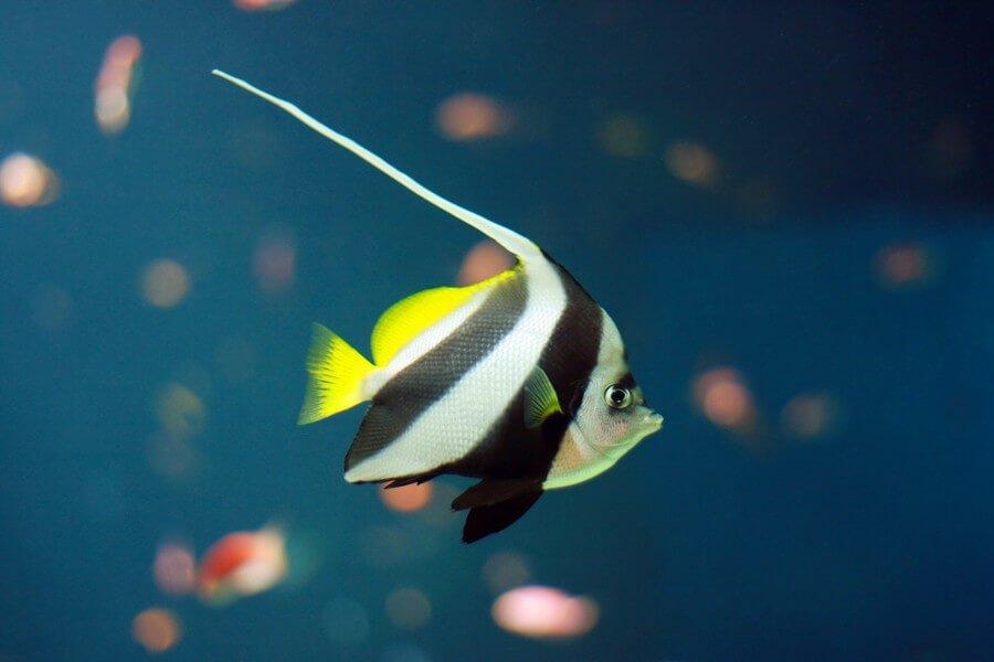 Are nitrates harmful for my aquarium?