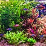 The ideal pH level for planted aquariums is anywhere between 6 - 8.5
