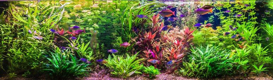 The Dutch style aquarium