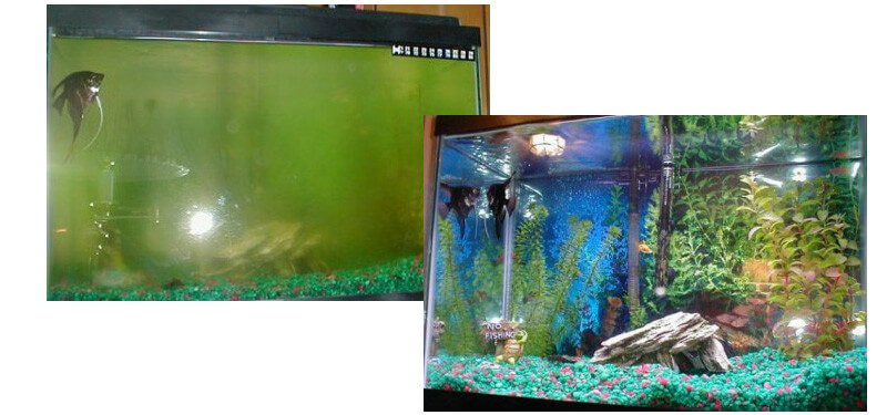 Clear aquarium water algone for My fish tank water is cloudy