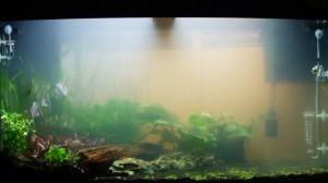 Clear cloudy aquarium water remove aquarium nitrate algone for Foggy fish tank