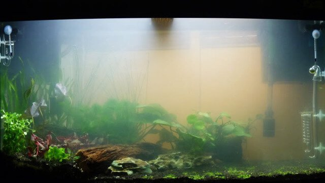 Fish aquarium water algone for My fish tank water is cloudy