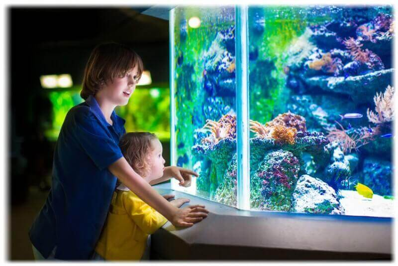 Kids watching fish in aquarium