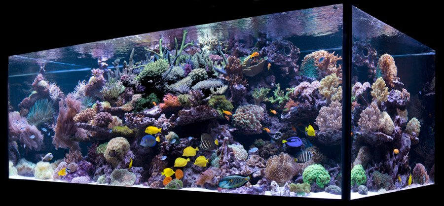 How to maintain a reef tank for Fish only saltwater tank