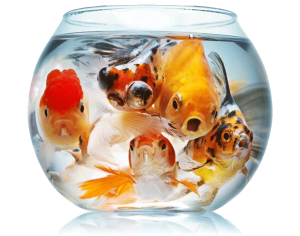 Crowded fish bowl