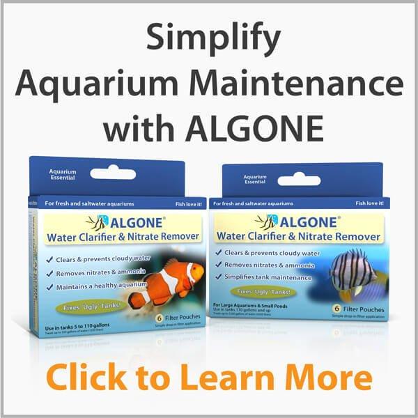 Algone simplifies aquarium maintenance