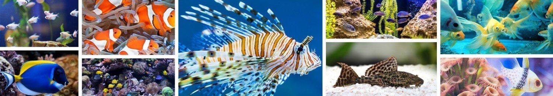 A variety of Aquariums